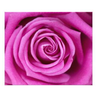 ピンクの花びら フォトプリント