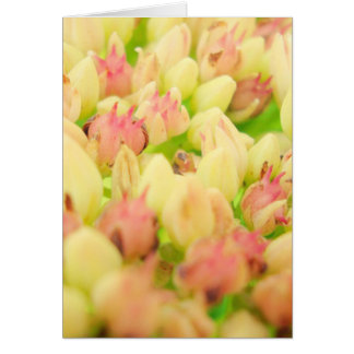 ピンクの花壇 カード