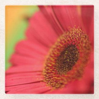 ピンクの花弁のコースターII -花のコレクション ガラスコースター