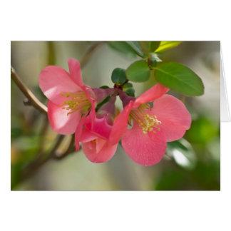 ピンクの花盛りのマルメロの白熱 カード