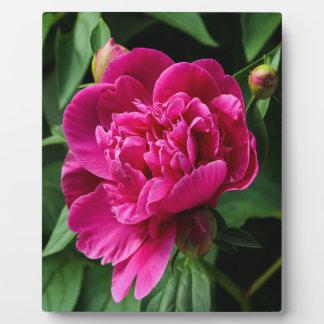 ピンクの花 フォトプラーク