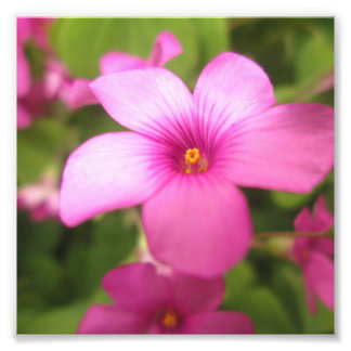 ピンクの花 フォトプリント