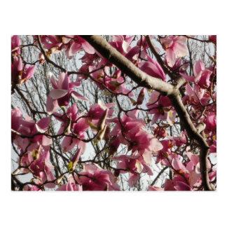 ピンクの花 ポストカード
