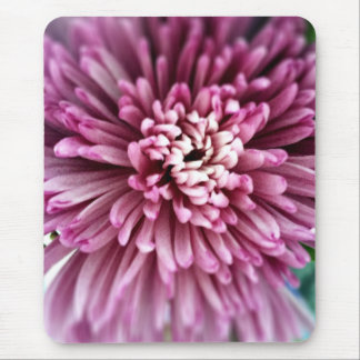 ピンクの菊 マウスパッド