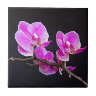 ピンクの蘭によってはタイルが開花します タイル
