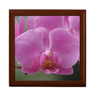 ピンクの蘭のギフト用の箱 ギフトボックス