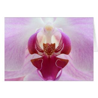 ピンクの蘭のマクロ カード