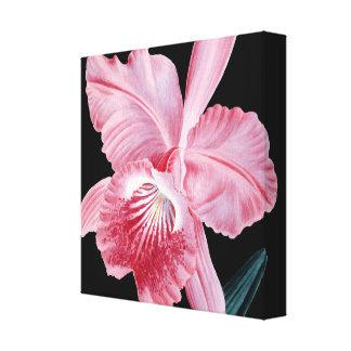 ピンクの蘭の黒のキャンバス キャンバスプリント