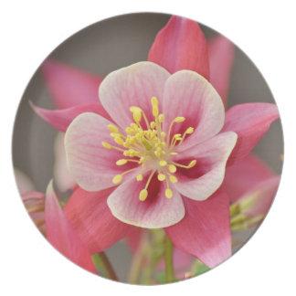 ピンクの鳩の花のプレート プレート