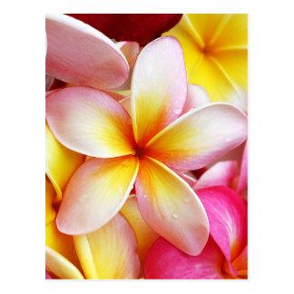 ピンクの黄色い紫色のプルメリアのFrangipaniの花 ポストカード