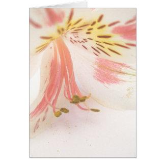 ピンクの黄色および白いユリ グリーティングカード