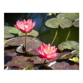 ピンクの《植物》スイレン はがき