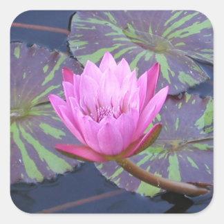 ピンクの《植物》スイレン スクエアシール