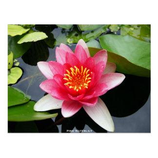 ピンクの《植物》スイレン ポストカード