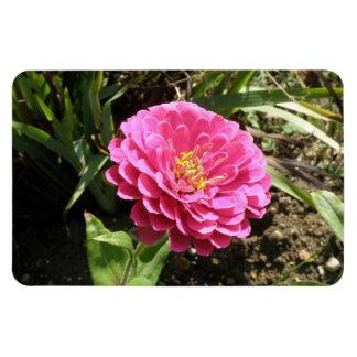 ピンクの《植物》百日草の報酬の磁石 マグネット