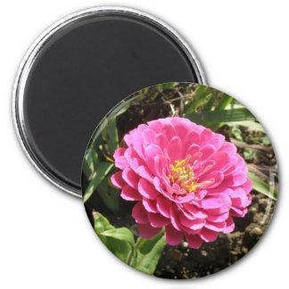 ピンクの《植物》百日草の磁石 マグネット