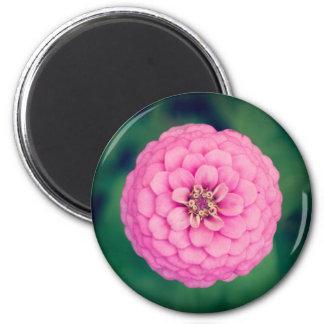 ピンクの《植物》百日草の花の円形の磁石 マグネット