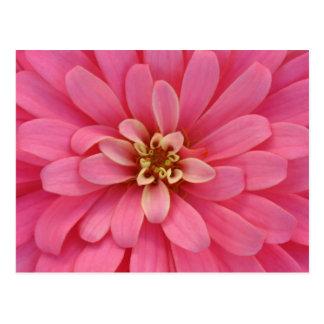 ピンクの《植物》百日草の花の郵便はがき ポストカード