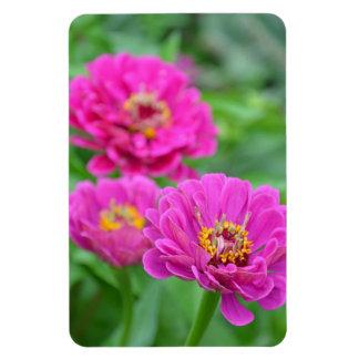 ピンクの《植物》百日草の花柄の磁石 マグネット