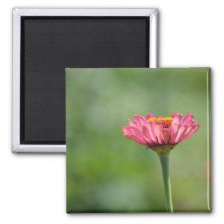 ピンクの《植物》百日草 マグネット