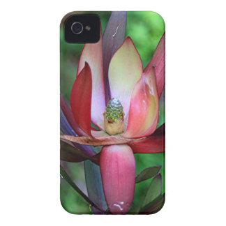 ピンクの、緑及びクリーム色のLeucadendron Case-Mate iPhone 4 ケース