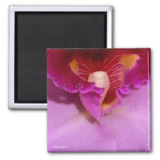 ピンクのCattleyaの蘭の磁石 マグネット