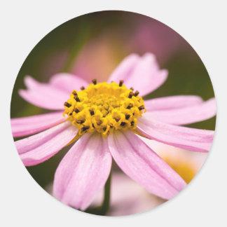ピンクのConeflower ラウンドシール