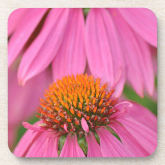 ピンクのechinaceaの花のプリント コースター