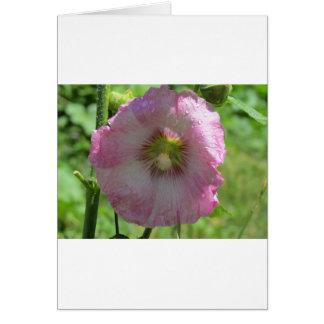 ピンクのHollyhock カード