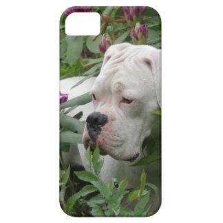 ピンクのRhodiesの白人のボクサー iPhone SE/5/5s ケース