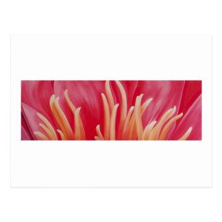 ピンクのWaterlilly -芸術カード ポストカード