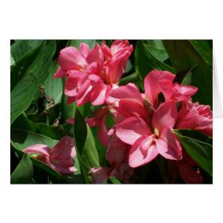 ピンクユリの花 カード
