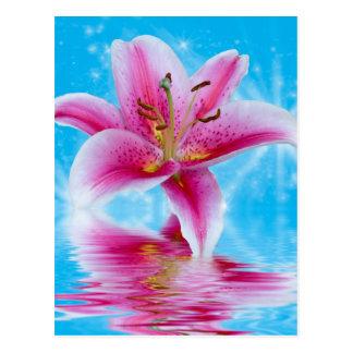 ピンクユリの輝き ポストカード