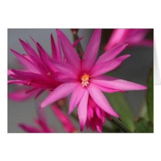 ピンク及び紫色の星の花のnotecards ノートカード