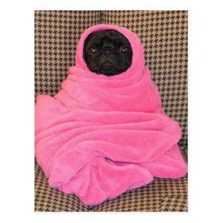 ピンク毛布の黒いパグ ポストカード