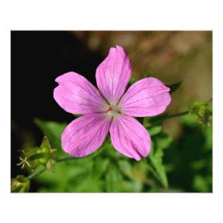 ピンク-紫色の花 チラシ
