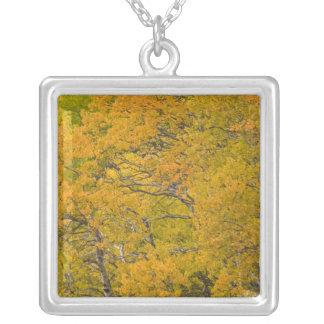 ピーク紅葉近東の《植物》アスペン果樹園 シルバープレートネックレス
