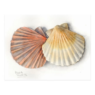 ファインアートの郵便はがき-海の貝、水彩画 ポストカード