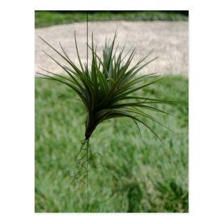 ファンキーな緑植物のBokタワーの庭フロリダ ポストカード