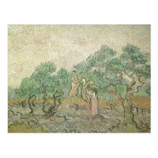 フィンセント・ファン・ゴッホ著オリーブ色の盗品、ヴィンテージの芸術 ポストカード