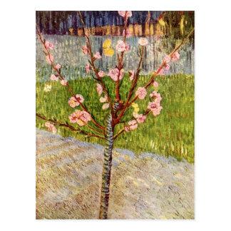 フィンセント・ファン・ゴッホ著花のアーモンド木 ポストカード