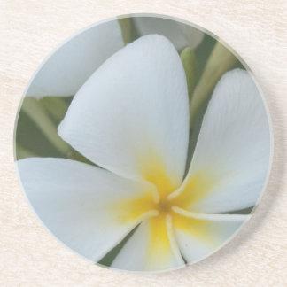 フィージーからの白い熱帯プルメリアの花 コースター