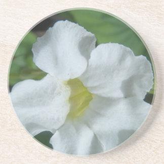 フィージーで見つけられる白い熱帯花 コースター
