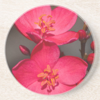 フィージーの赤く、ピンクの熱帯花 コースター