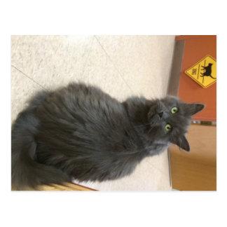 フィートEllieを交差させている猫 ポストカード