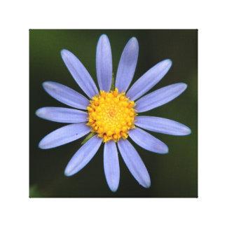 フェリシアAmelloides (青のマーガレットデイジー) キャンバスプリント