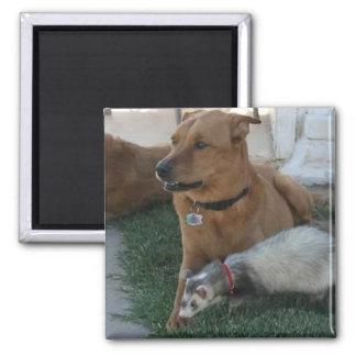 フェレットおよび犬が付いている動物の友人の磁石! マグネット