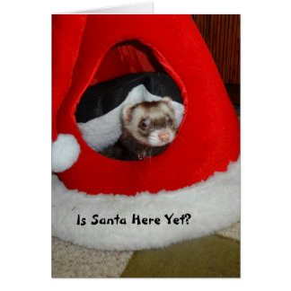 フェレットの待っているサンタのクリスマスカード カード