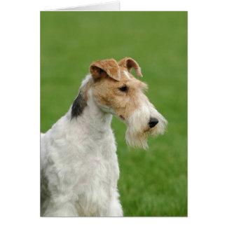 フォックステリア犬 カード