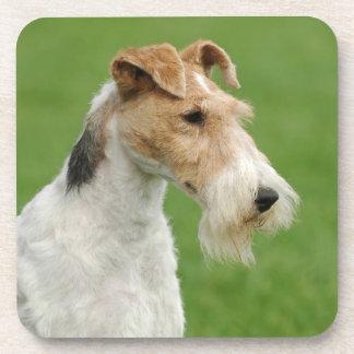 フォックステリア犬 コースター